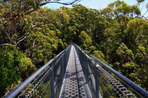 treetopwalklong